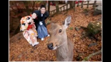 Your Overseas Wedding - Japan Classic Series Pre-Wedding at Nara 日本奈良婚照拍攝