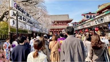 【4K】Tokyo Cherry Blossoms 2021 - Asakusa