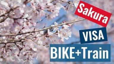 Travel Japan | Bike + Train to Renew Visa @ Nagoya Immigration (Yokkaichi) Bonus - Sakura  Viewing