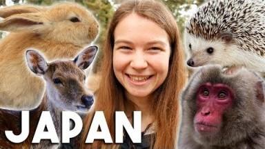Japan's Animals! (Cute Animal Japan Travel Vlog)