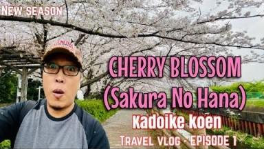 Japan Cherry Blossom (Sakura No Hana )| New Season | Travel Vlog Episode 1