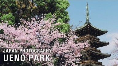 Fujifilm Street Photography POV in Ueno, Tokyo, Japan | 富士フィルム X-T3, XF18-135mm | 上野公園の桜写真